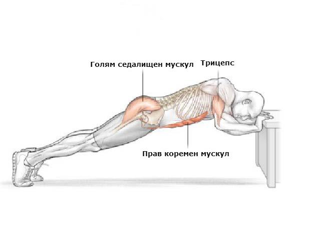 Кои мускули вземат участие при изпълнението на трицепсово разгъване