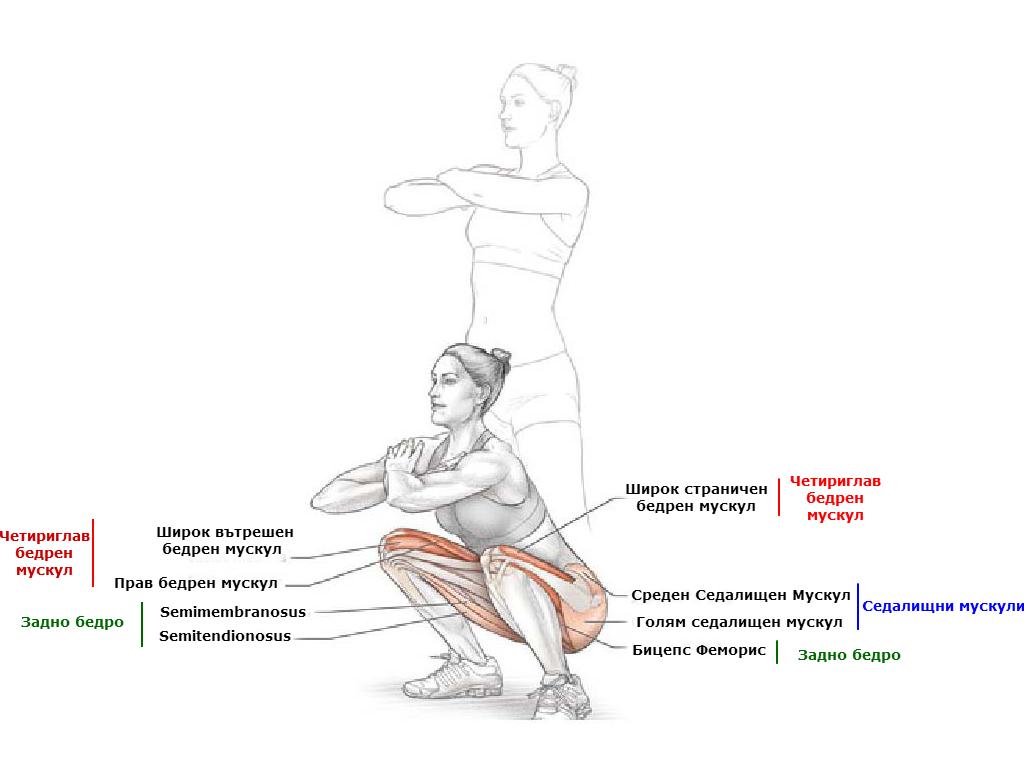 Кои мускули вземат участие при клекът със собсвено тегло