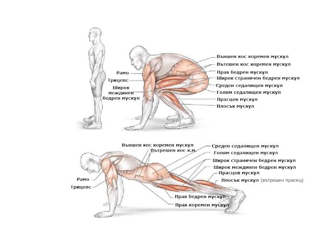 Бърпи- 30 дневно предизвикателство-Кои мускули натоварва упражнението